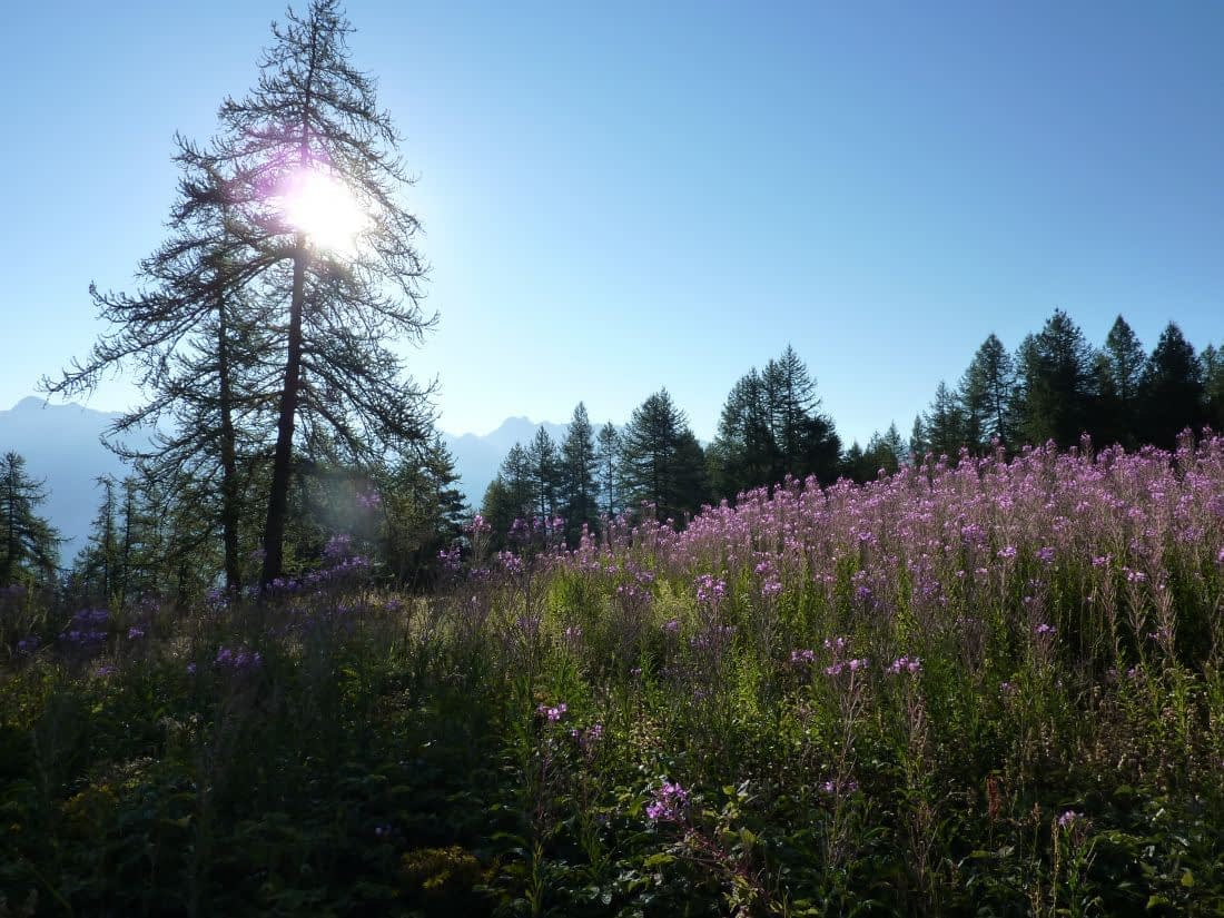pittoreske bergweide met zon en bloemen